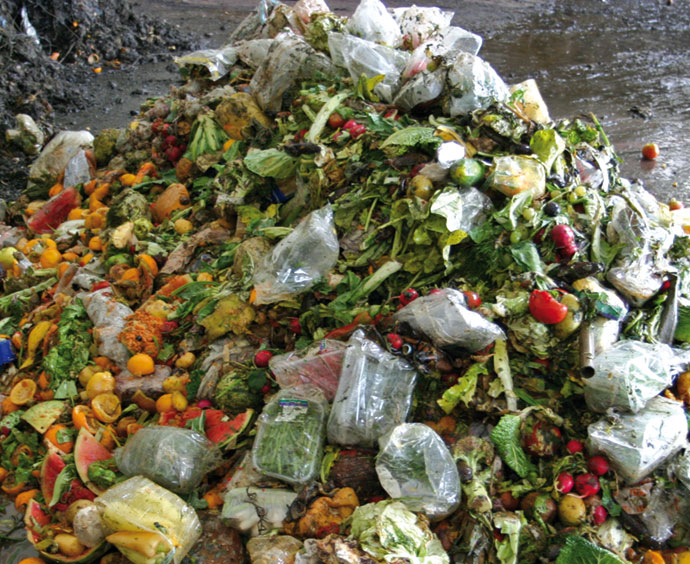 Food waste processing and recycling solutions